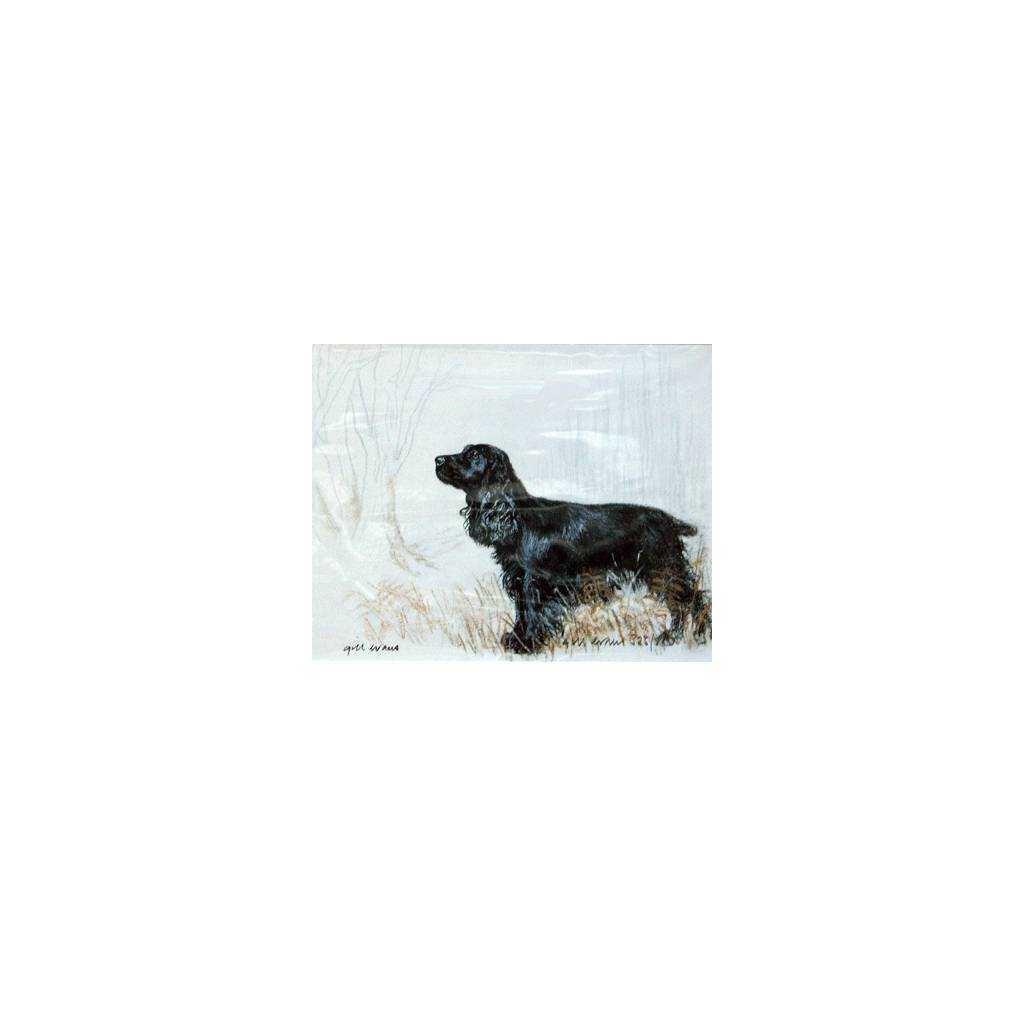 Black Cocker Spaniel By: Gill Evans, Matted