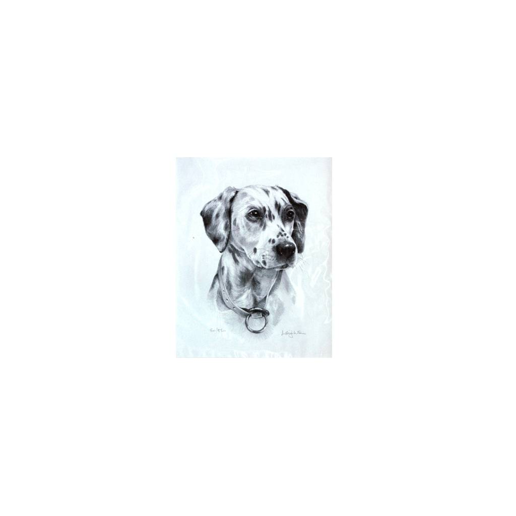 Dalmatian By: Sandra Leighton, Matted