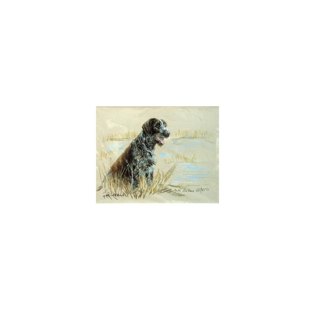 German Wirehair Pointer By: Gill Evans, Matted