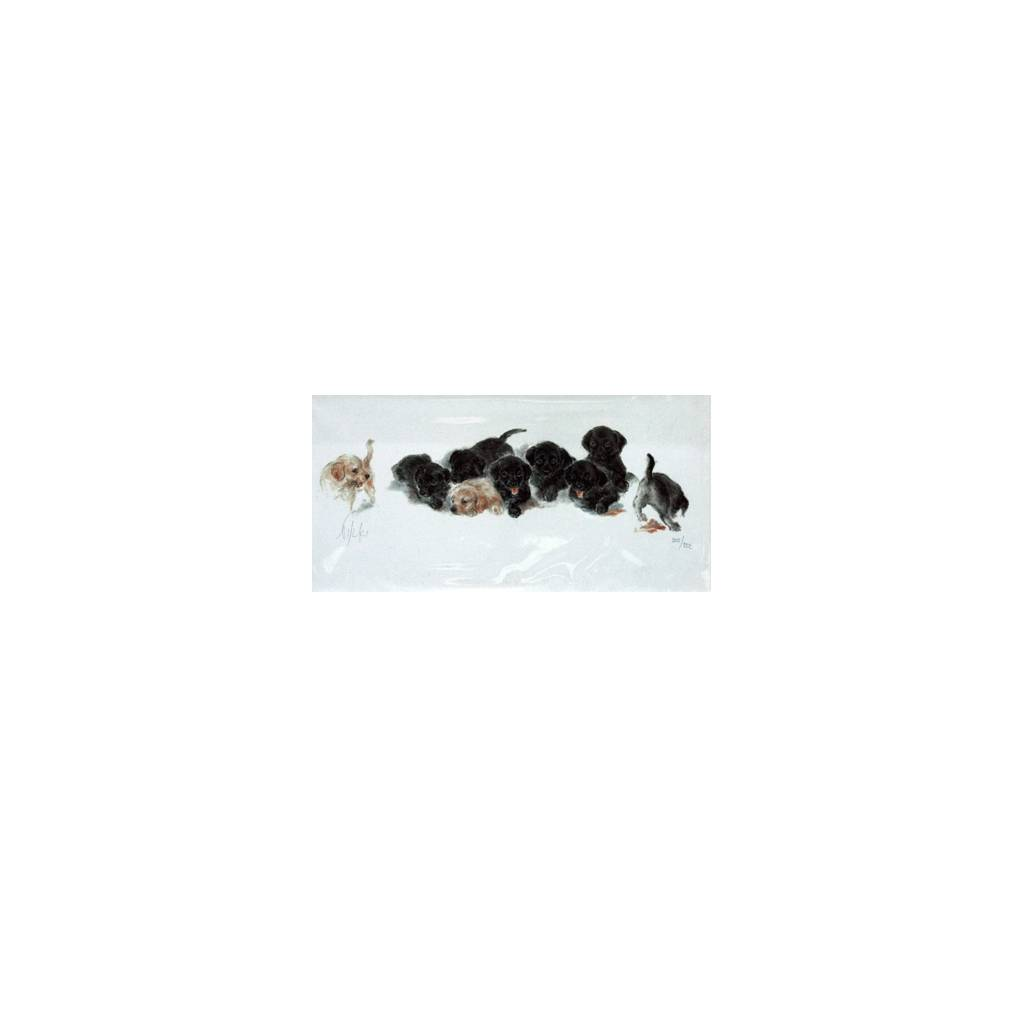 Labrador Puppies By: Nikki, Matted