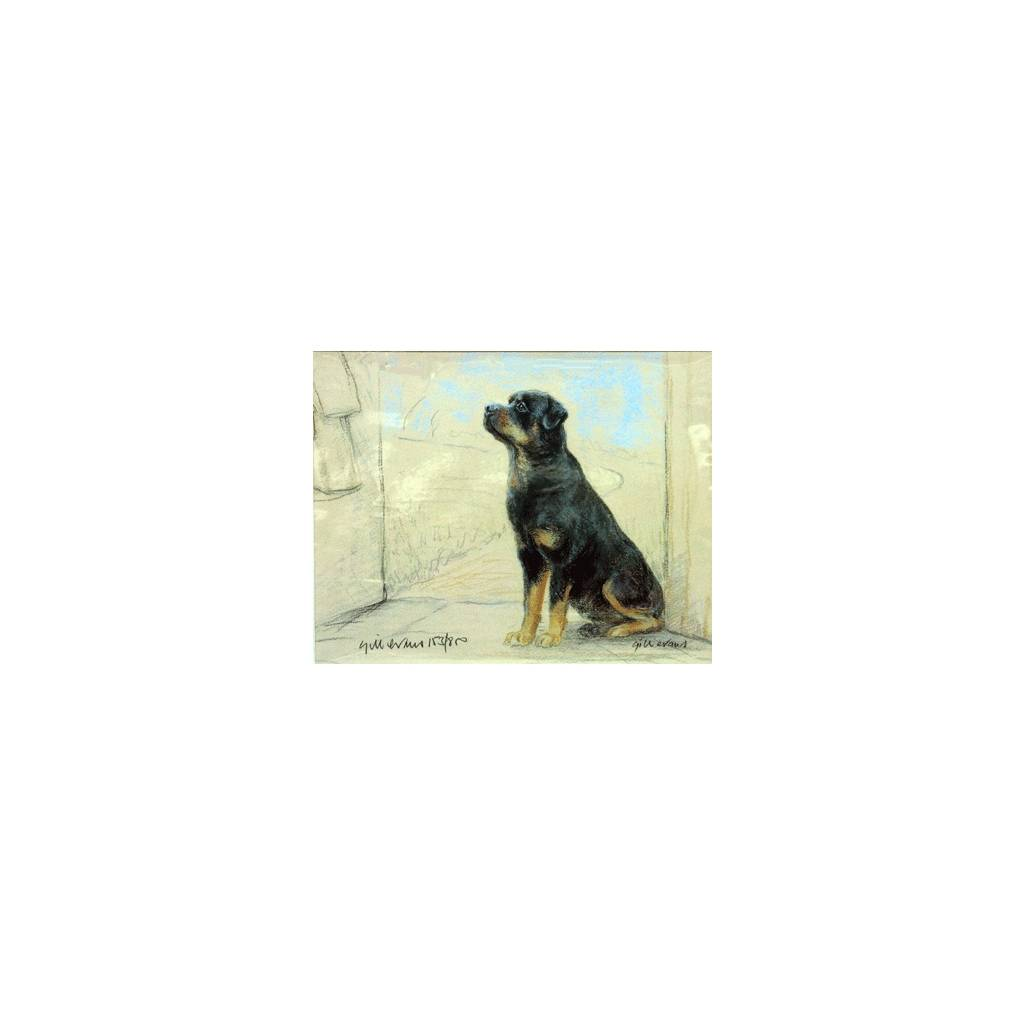 Rottweiler By: Gill Evans, Matted