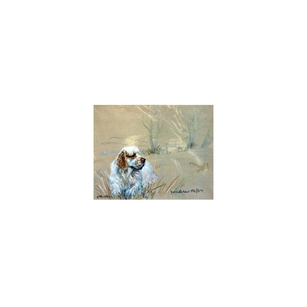 Clumber Spaniel By: Gill Evans, Matted
