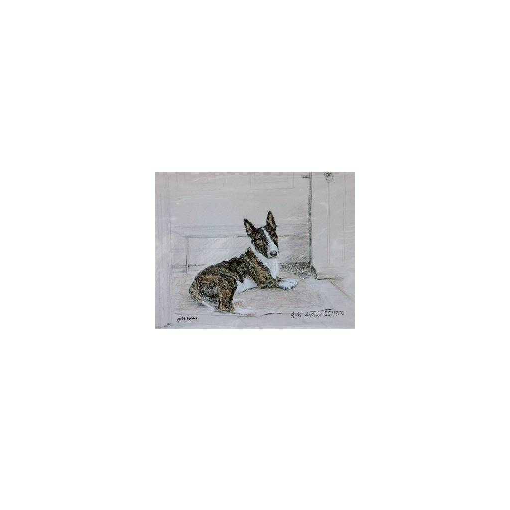 Bull Terrier By: Gill Evans, Matted