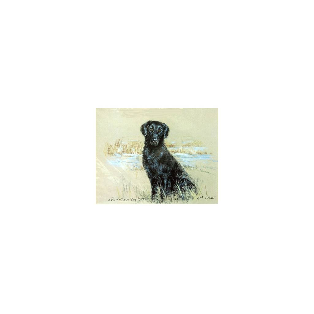 Flat Coated Retriever By: Gill Evans, Matted
