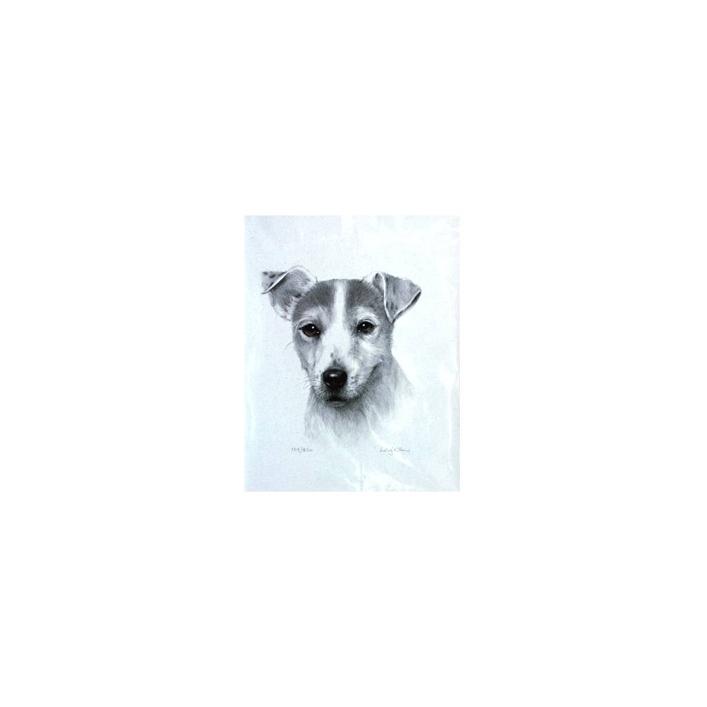 Jack Russell Terrier By: Sandra Leighton, Matted
