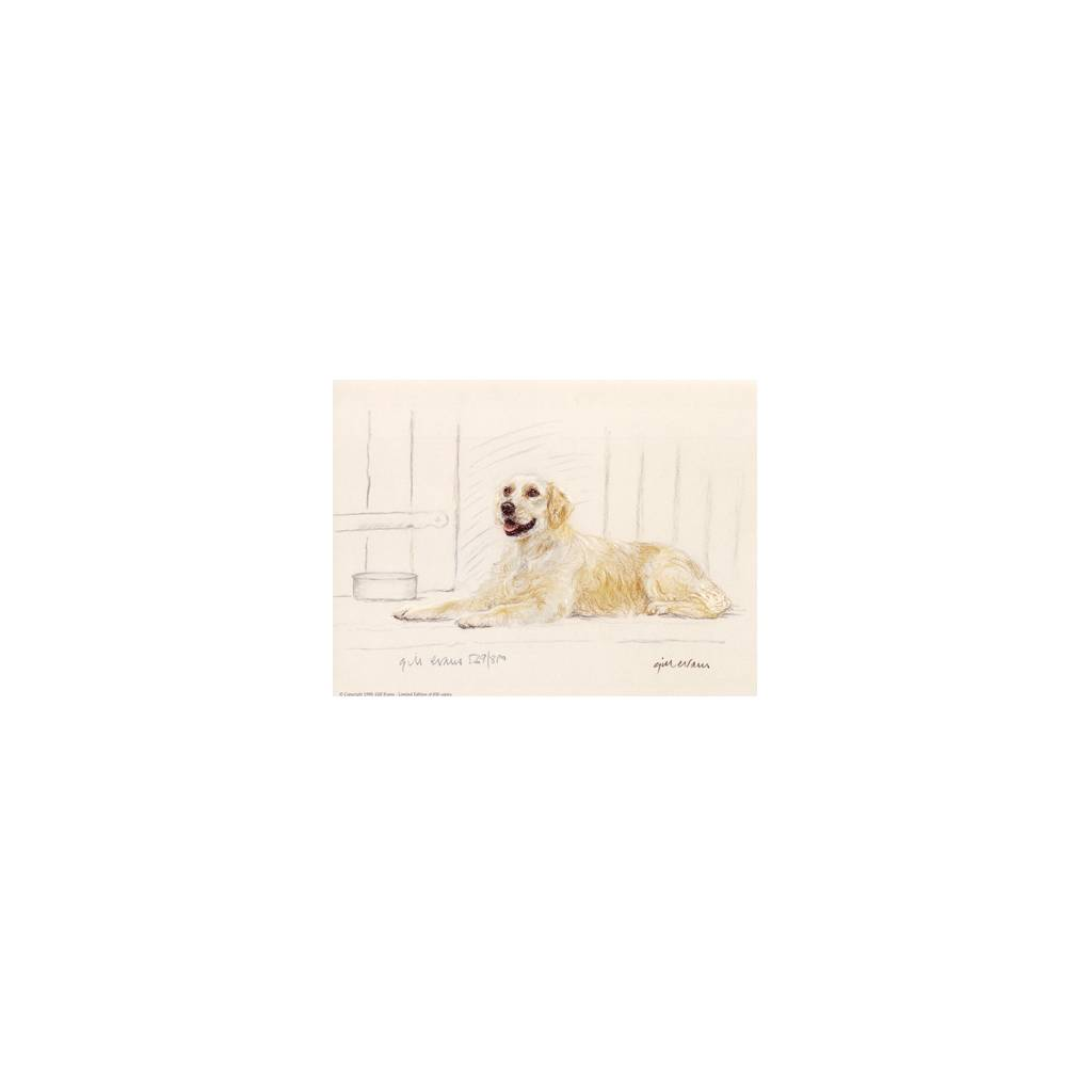 Golden Retriever By: Gill Evans, Matted