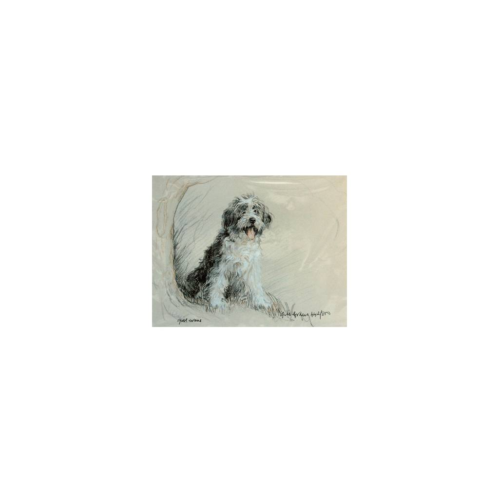 Bearded Collie By: Gill Evans, Matted