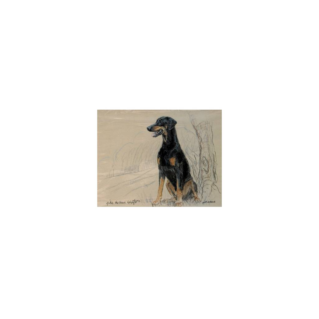 Doberman By: Gill Evans, Matted
