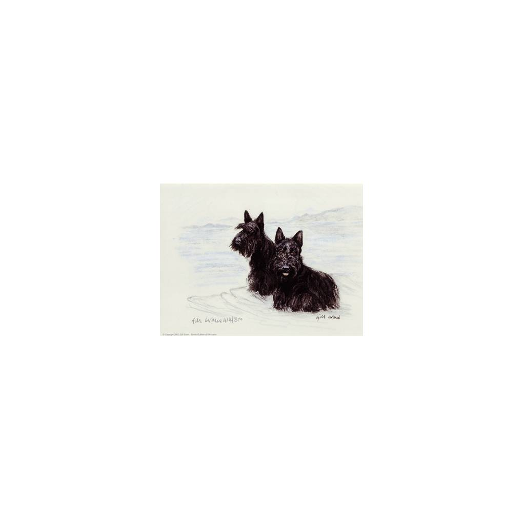 Scottish Terriers By: Gill Evans, Matted