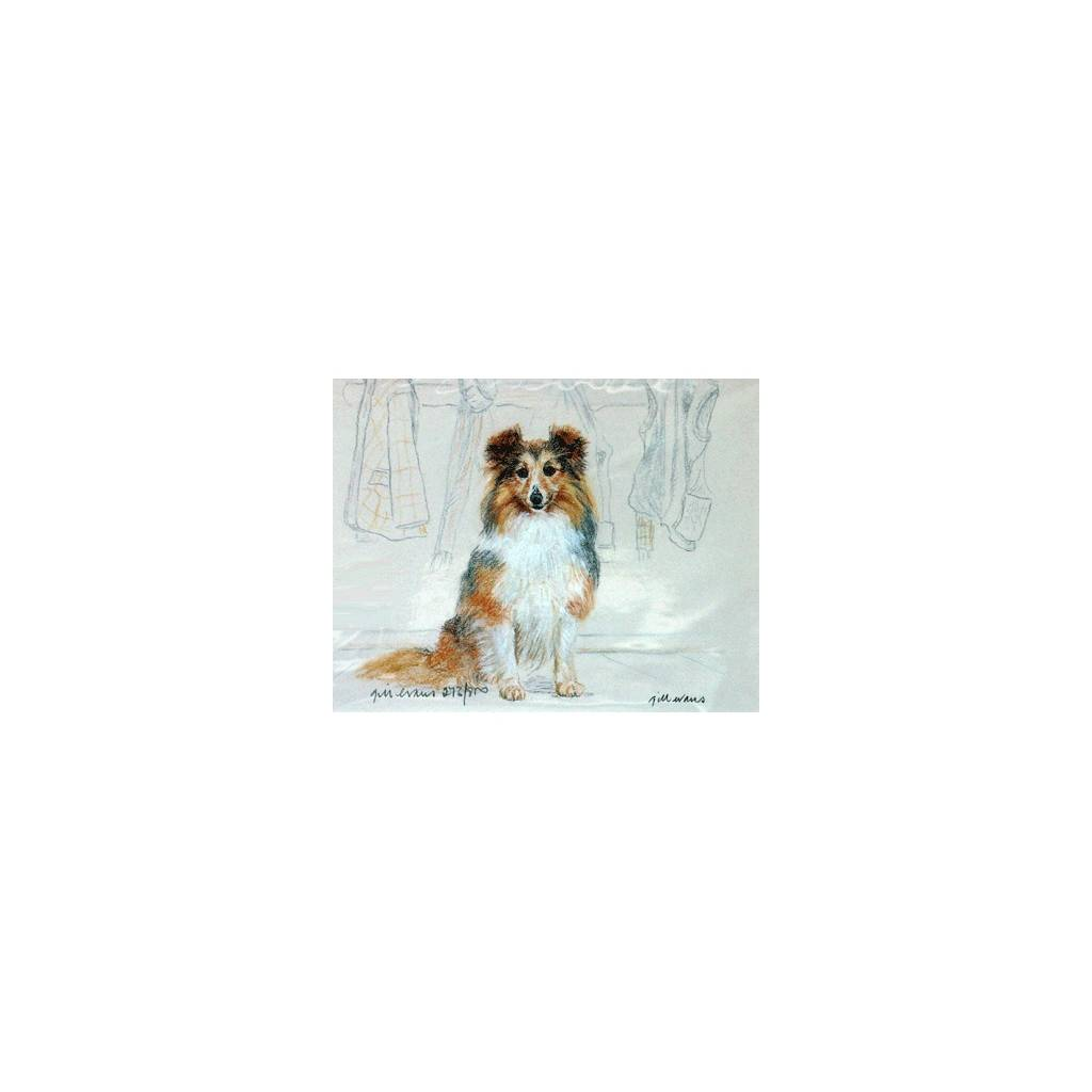 Shetland Sheepdog By: Gill Evans, Matted