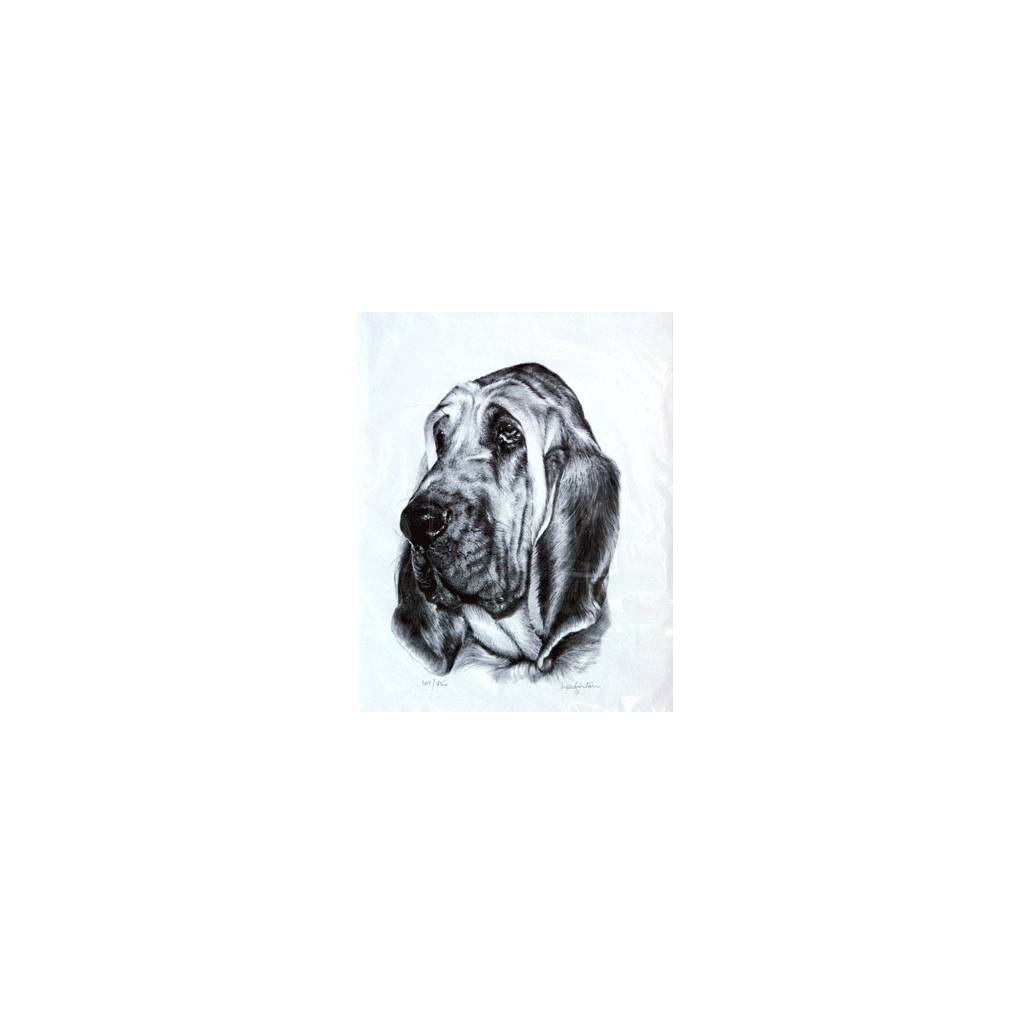 Bloodhound By: Sandra Leighton, Matted