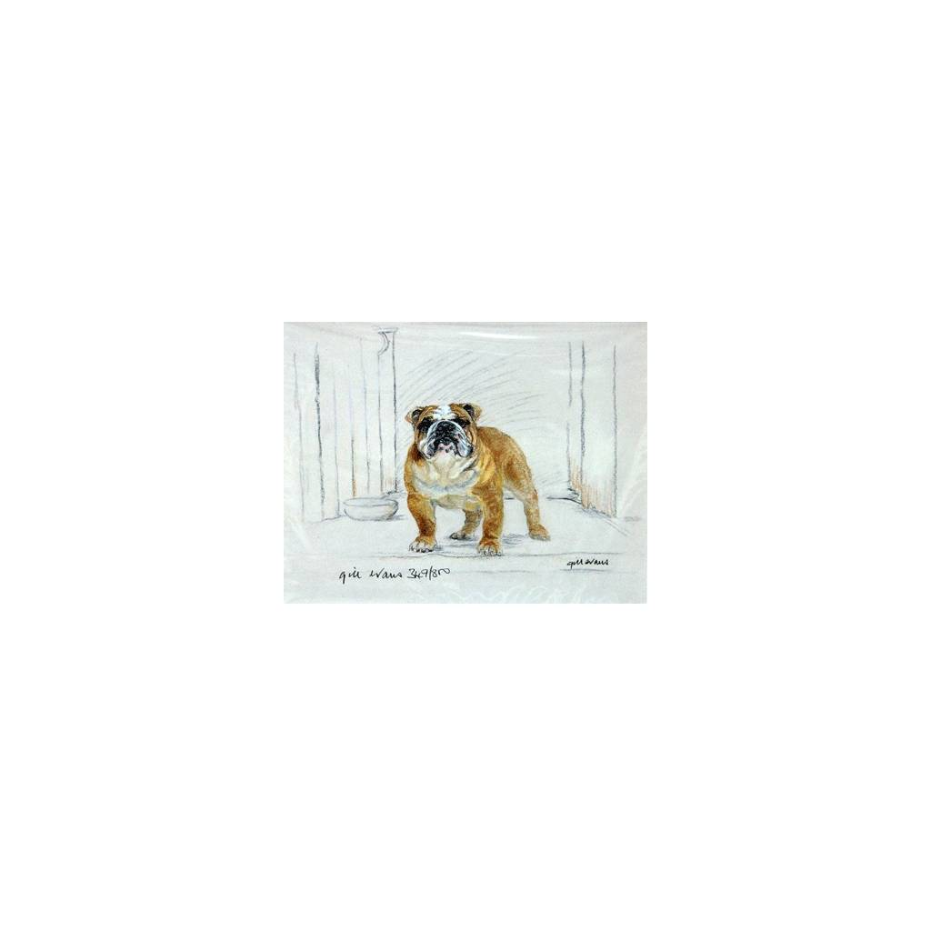 Bulldog By: Gill Evans, Matted