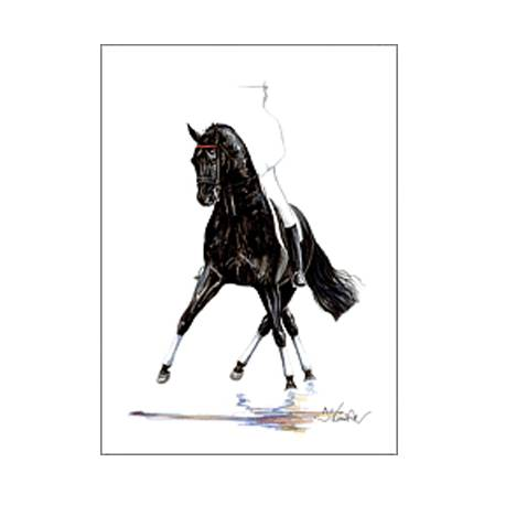Noblesse (Dressage) By: Jan Kunster