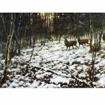 Christmas Eve (Deer) Blank Greeting Cards - 6 Pack
