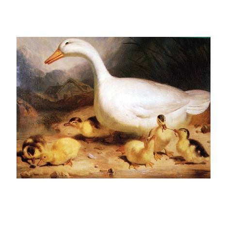 Duck and Ducklings Blank Greeting Cards - 6 Pack