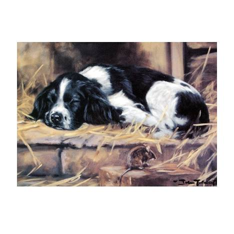 Snoozy (English Springer) Blank Greeting Cards - 6 Pack