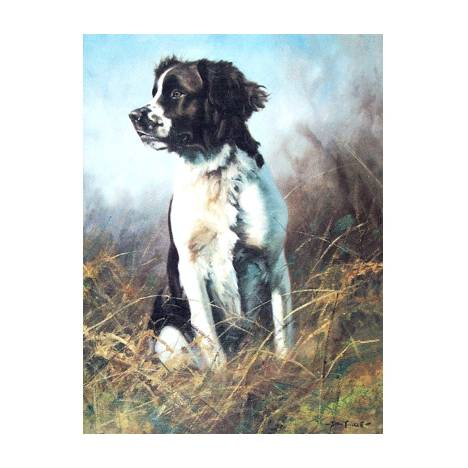 Steady (English Springer) Blank Greeting Cards - 6 Pack