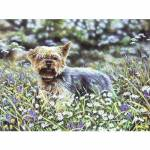 Yorkie (Yorkshire Terrier) Blank Greeting Cards - 6 Pack
