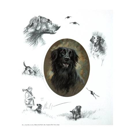 Oval Flat Coat By: Mick Cawston