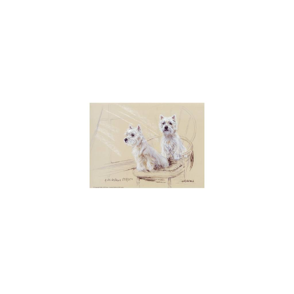 West Highland Terriers By: Gill Evans, Matted