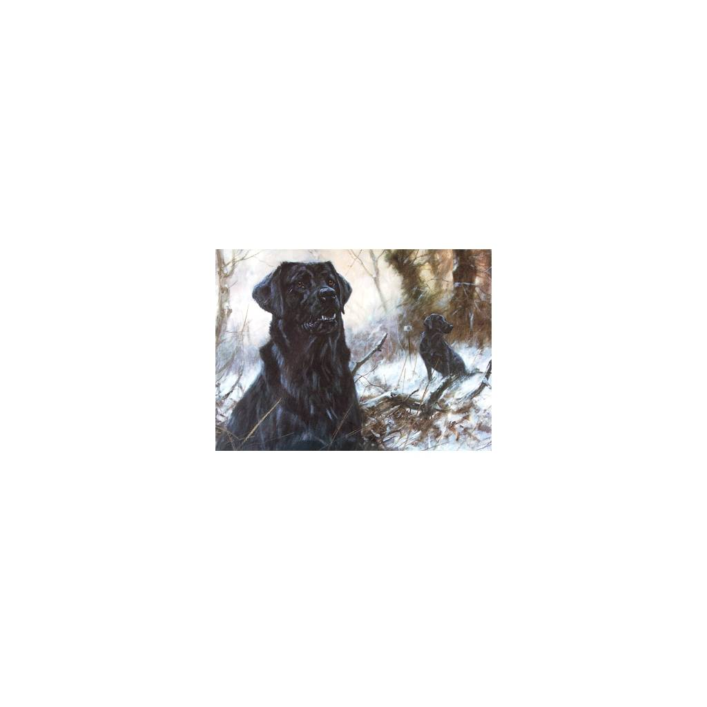 Concentration (Labrador Retriever) Blank Greeting Cards - 6 Pack
