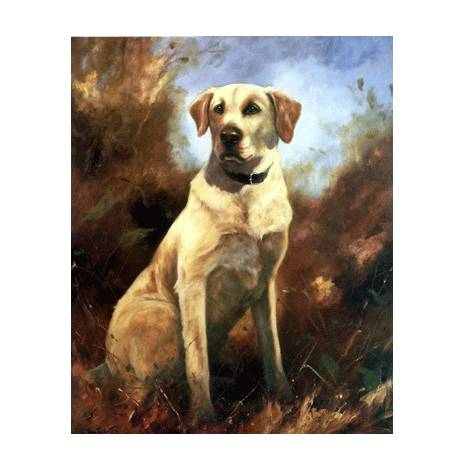 Yellow Lab By: John Trickett