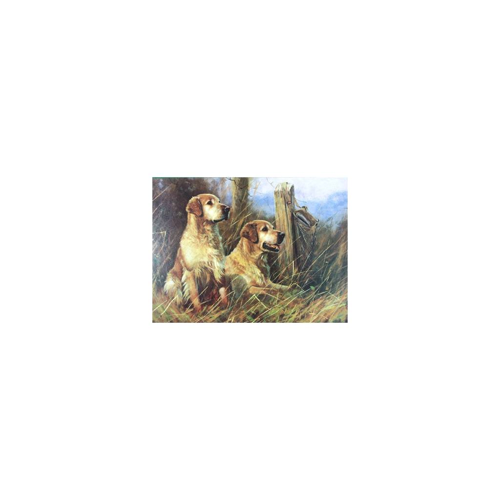 Golden Days (Golden Retrievers) Blank Greeting Cards - 6 Pack