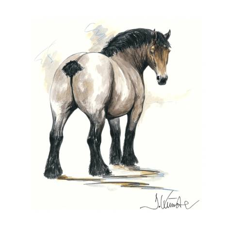 Chronos (Draft Horse) By: Jan Kunster, Matted