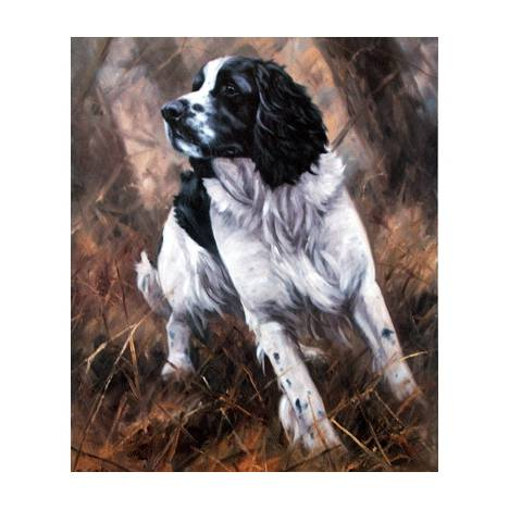 Black and White Springer By: John Trickett