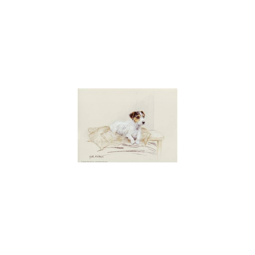 Terrier on Jacket By: Gill Evans, Matted