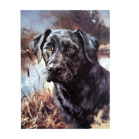 Black Lab By: Mick Cawston