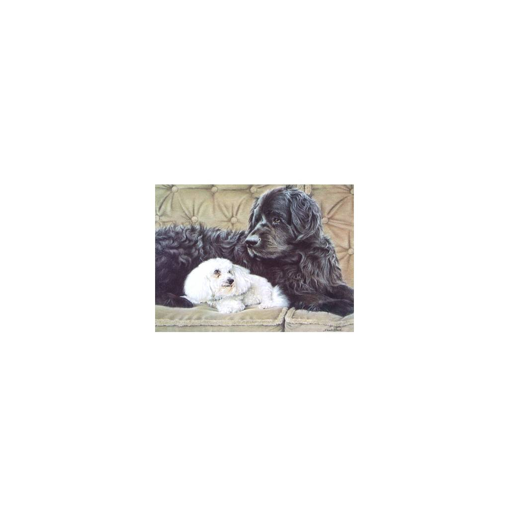 The Nanny (Newfoundland and Bichon) Blank Greeting Cards - 6 Pack