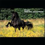 Puzzle - Friesian