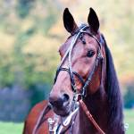 HorZe Elite Open Leather Race Bridle Complete