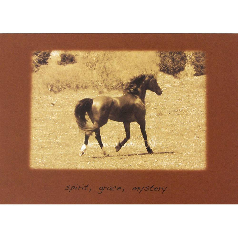 Sympathy horse spirit grace mystery blank greeting cards 6 pack m4hsunfo