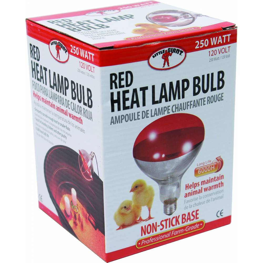 Little Giant Poultry Heat Lamp Bulb Horseloverz