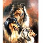 Sally Mitchell Fine Art Dog Prints |The Rough Collie