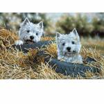 Sally Mitchell Fine Art Dog Prints - Two Tyred