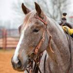 Professionals Choice CSE Browband Headstall