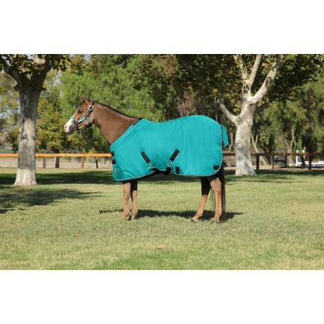 Kensington All Around Medium Weight Turnout Blanket - Pony