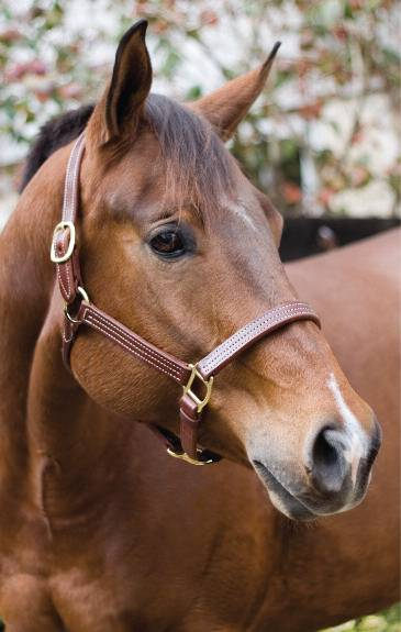 Perris Triple Stitched Halters
