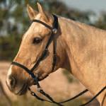 Nurtural Horse English Tack