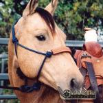 Martin Saddlery Horse Equipment