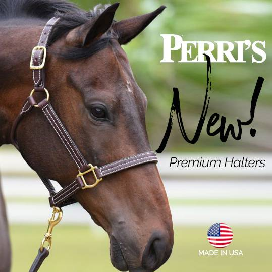 NEW! Perri's Premium Leather Halters<br>FREE Gift With Every Purchase