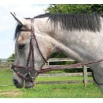 Shannon Raised Snaffle Bridle